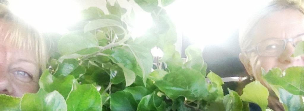 systrarna_good_garden_beskuren